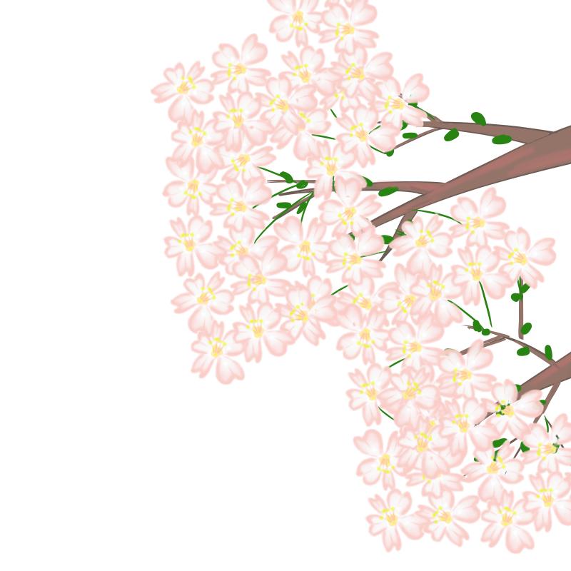今年もこの季節!桜のイラスト(背景無し)