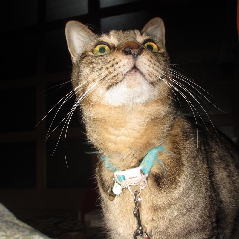 アッコにおまかせ!で紹介された2015年猫人気ランキングと真のチャンピオン
