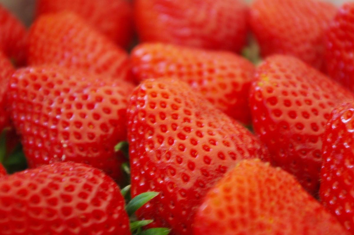 イチゴ狩りは何個食べれば元が取れるのか?月曜から夜ふかしより